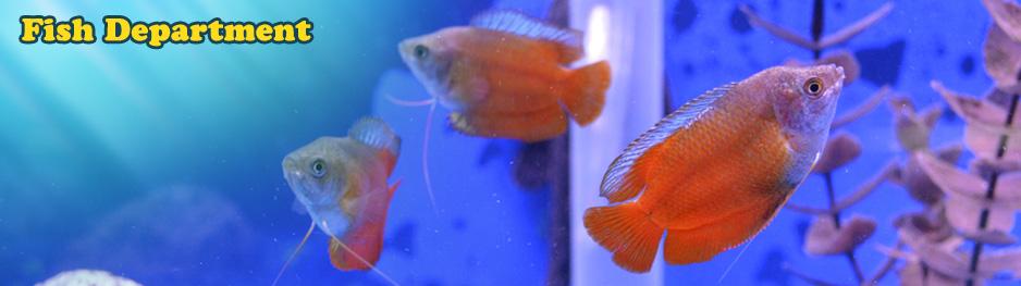 Buzz n' B's Aquarium & Pet Shop | Fish & Aquatic - Bettas