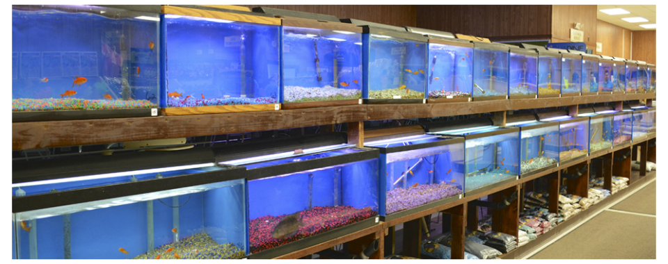 Buzz n' B's Aquarium & Pet Shop | Erie's Favorite Local Pet