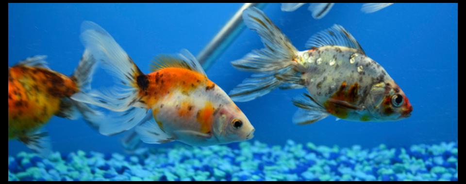 Buzz N Bs Aquarium Pet Shop Eries Favorite Local Pet Store