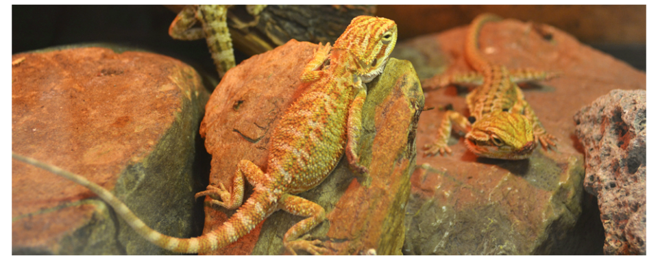 Buzz n' B's Aquarium & Pet Shop | Erie's Favorite Local Pet