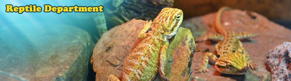 Buzz n' B's Aquarium & Pet Shop | Reptiles - Boas, Pythons